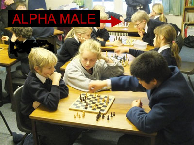 Alpha male chess club